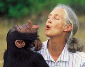 Figura 1 – (da direita para a esquerda) Jane Goodall e Chimpanzé